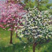 Dogwoods in Bloom 12x9 .jpg