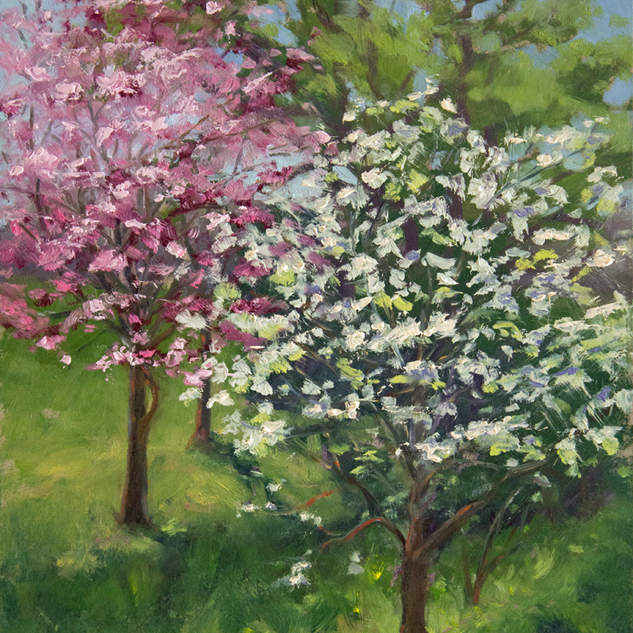 Dogwoods in Bloom 12x9 .jpg