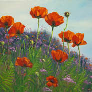 Wild Poppies 24x30.jpg