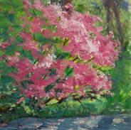 Azaleas in Pink 10x8.jpg