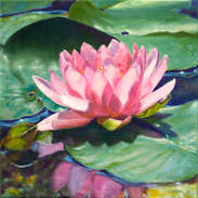 Water Lily in Pink 20x20.jpg