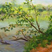 Yadkin River Park 8x10.jpg