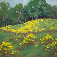 Meadow at Woodleaf 9x12.jpg