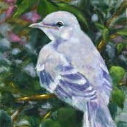 Young Mockingbird12x9.jpg