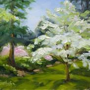 Spring Dogwood 5x7.jpg