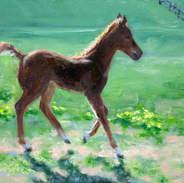 Morgan Foal 6x8.jpg