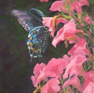 Black Swallowtail Butterfly 24x12.jpg