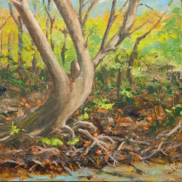 Tangled Wood 8x10.jpg