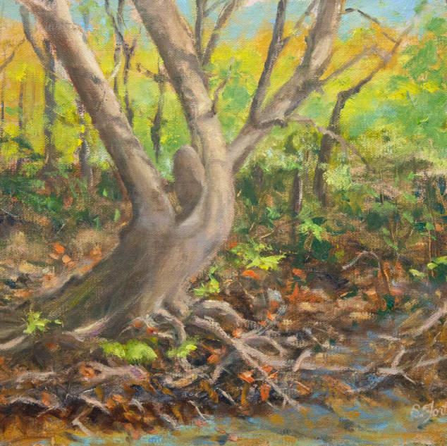 Tangled Wood 9x12.jpg