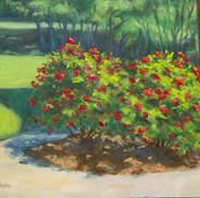 Rose Bushes 8x10.jpg