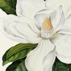 MDC_Web_2016_Floral_FN_White