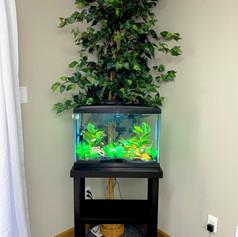 fish aquarium.1.jpg