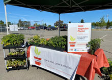 Free Vegetable Plants for Clients at Pet