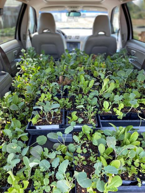 Plants Loaded for Distribution.jpg