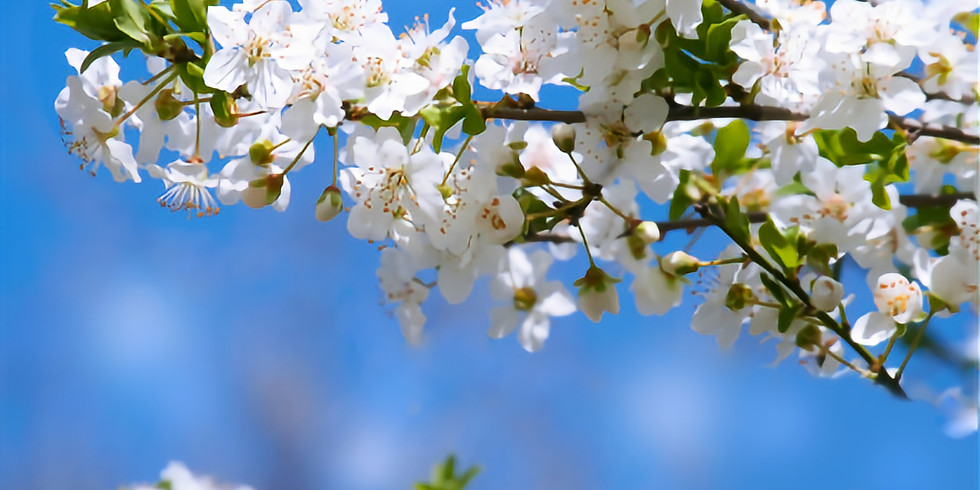Relieve Stress with Bach Flower Remedies