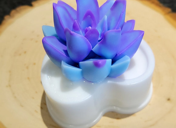 Heart Flowerpot Succulents