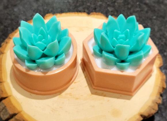 Coconut Succulent Series