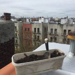 I Grew Potatoes and Black Beans on the Roof of My Brooklyn Apartment and You Can Too!