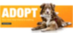 bnr-adopt-a-pet.jpg