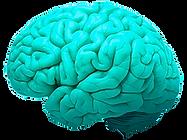 Online shmonline | Brain