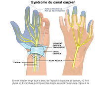 canal-carpien11.jpg