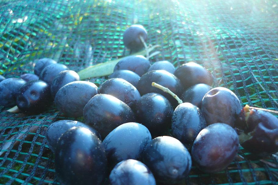 olivesnoiresdecorse.JPG