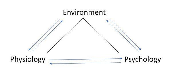 Environment brain model.jpg