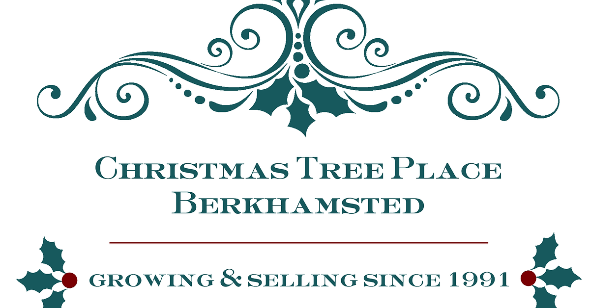 Christmas Trees Berkhamsted