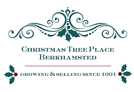 Christmas Tree Place Logo - teal.png