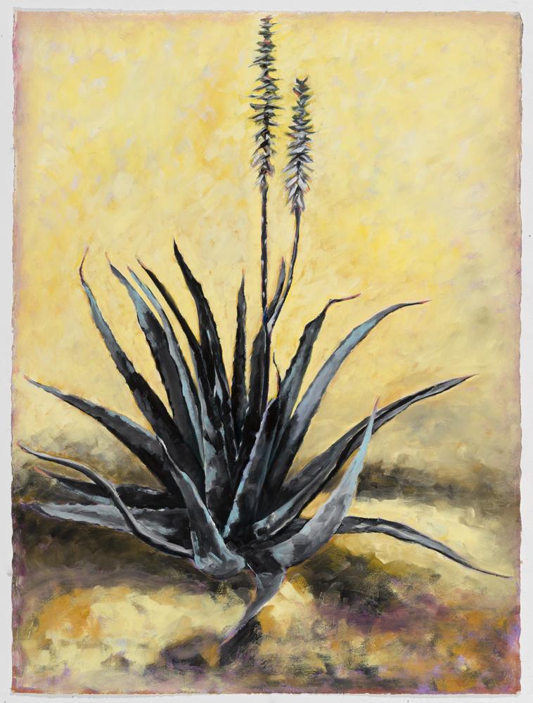 """""""Aloe Still Life"""""""