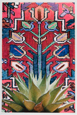 """""""Agave Tapestry"""" II"""