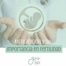 ¡La metilación y su importancia en la Fertilidad!