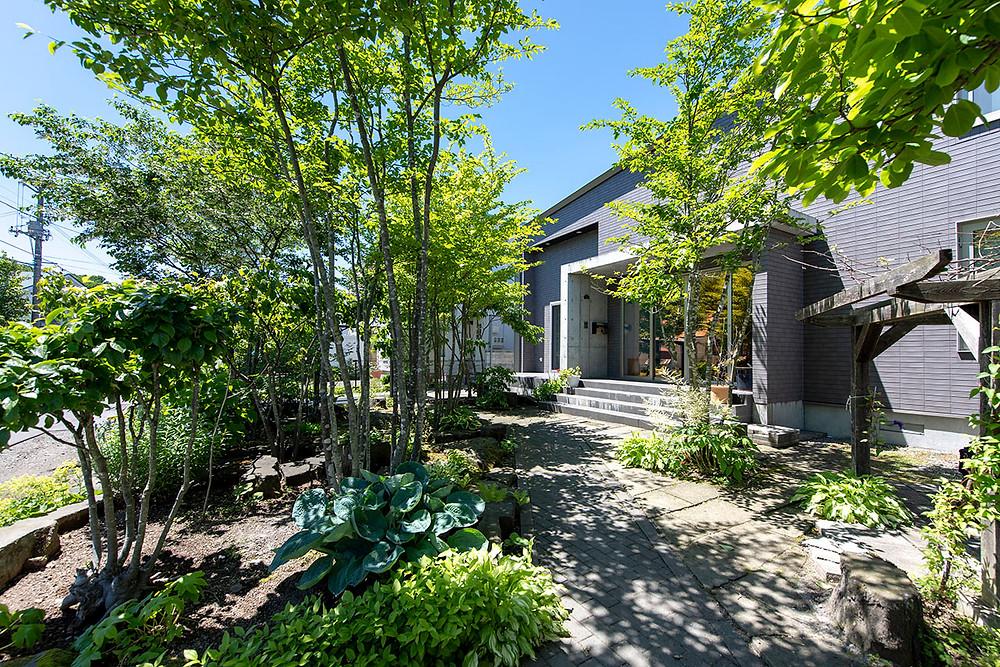 アオハダと札幌軟石の庭