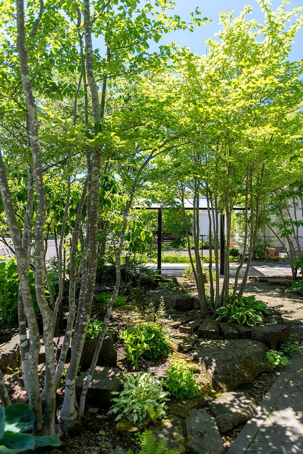 アオハダの庭