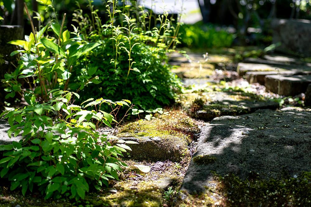 アオハダと札幌軟石のお庭
