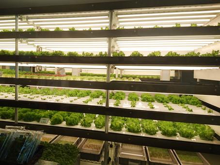 野菜の室内水耕栽培が見られるヘルシーレストラン⇒リリーフ