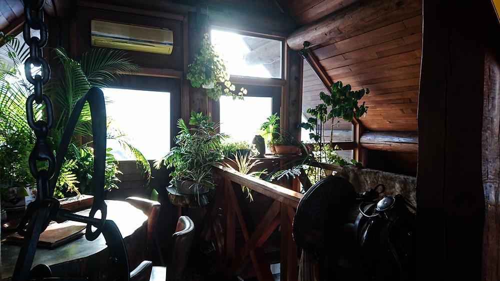 カフェ インテリア グリーン