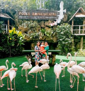 Family Aguiventures at Jurong Bird Park Singapore with Pink Flamingos