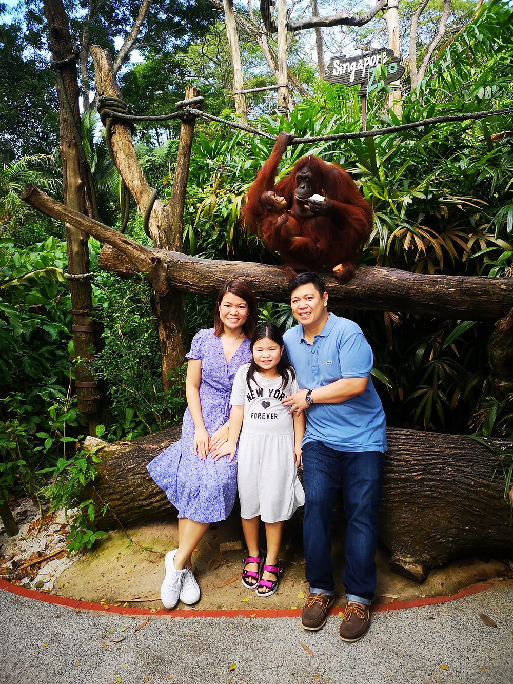 Family Daddy Mommy and Daughter with Orangutans at Singapore Zoo