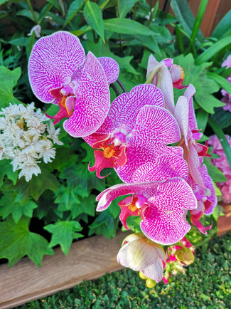 Orchids at Gardens by the Bay Singapore