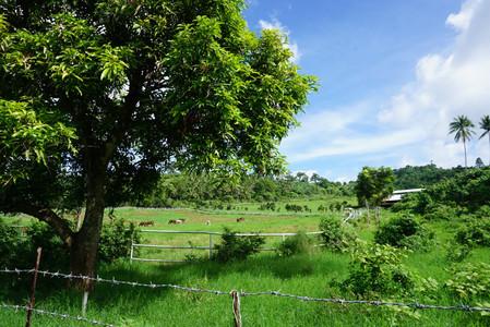 View while walking towards Pandin Lake of San Pablo Laguna