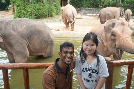 Smiling little girl with Singapore Zoo elephant trainer and elephants