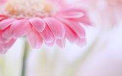 6856160-light-pink-flowers.jpg