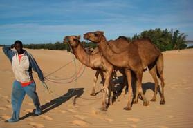 Surprise camels near Lac Rose