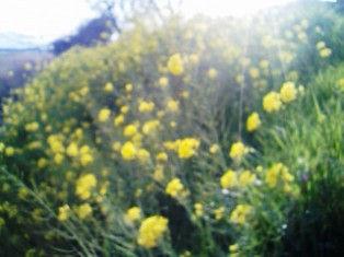 2009年3月23日 (月)   20093-242.jpg