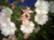 2009年6月6日 (土)  yu-gao.JPG