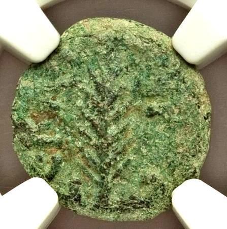 Moeda Judia Bíblica Judaea Judaea Porcius Festus (AD 59-62). AE prutah. NGC Mone