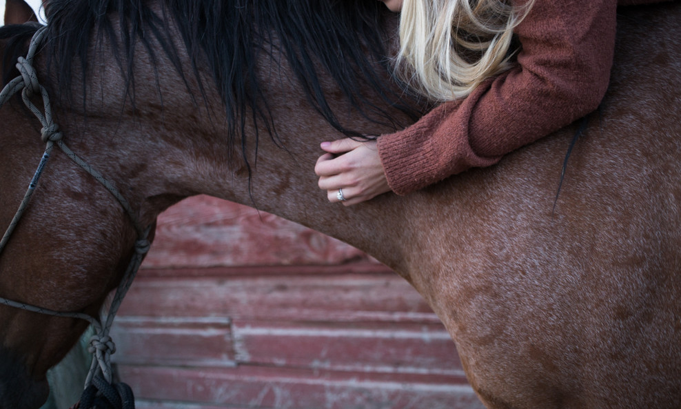 equine therapy riding horses