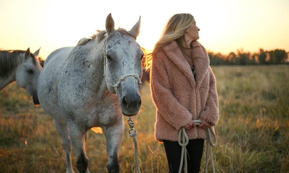 horse guided healing
