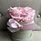 Thumbnail: Flowerbox Klein Infinity Rose rosa